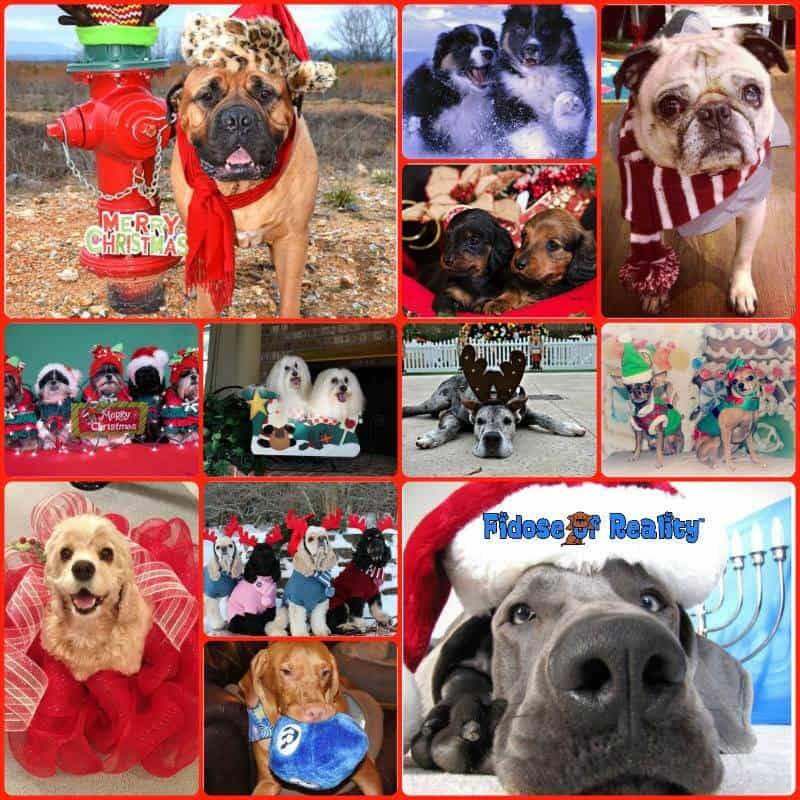 Dog holiday photo contest