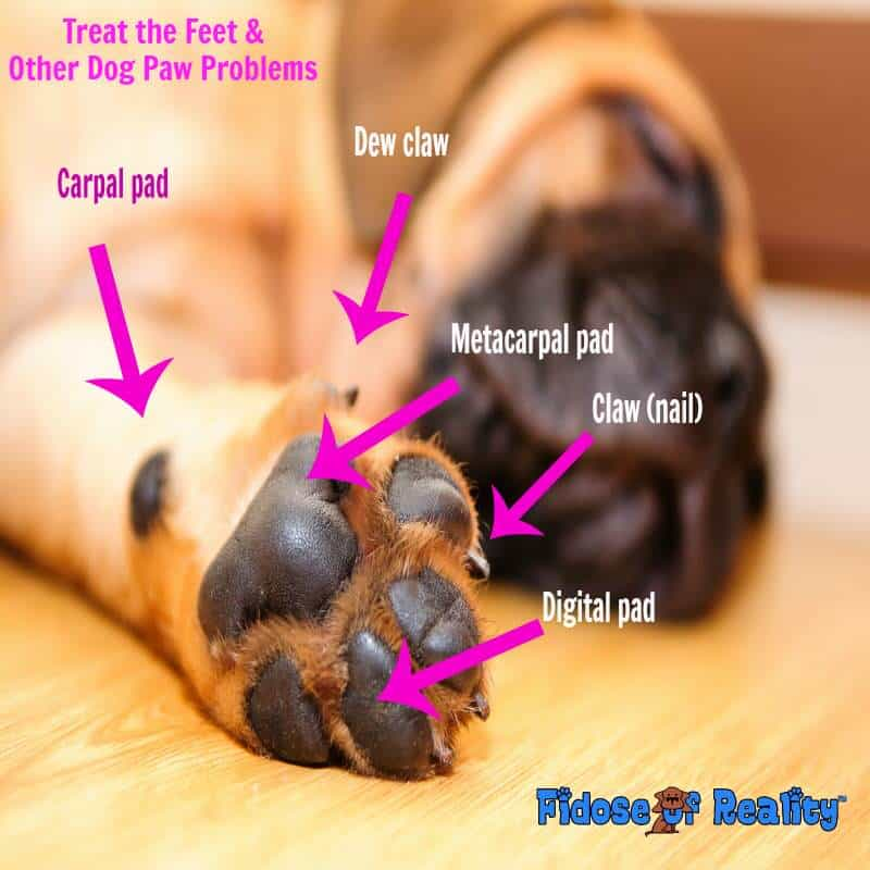 Treat the Feet and Other Dog Paw Problems - Fidose of Reality
