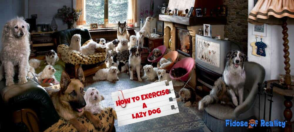 lazy dog exercises
