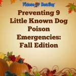dog poison emergency