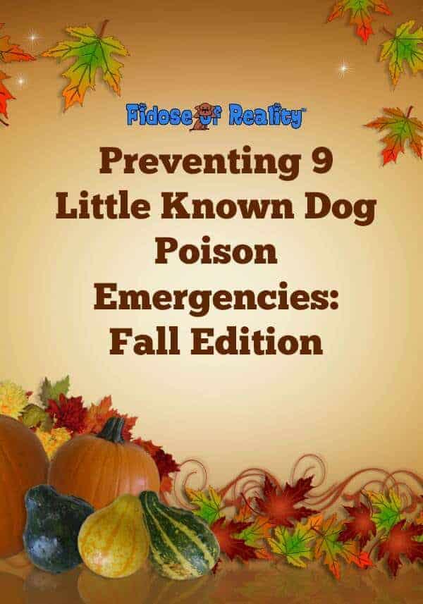 dog poison emergency
