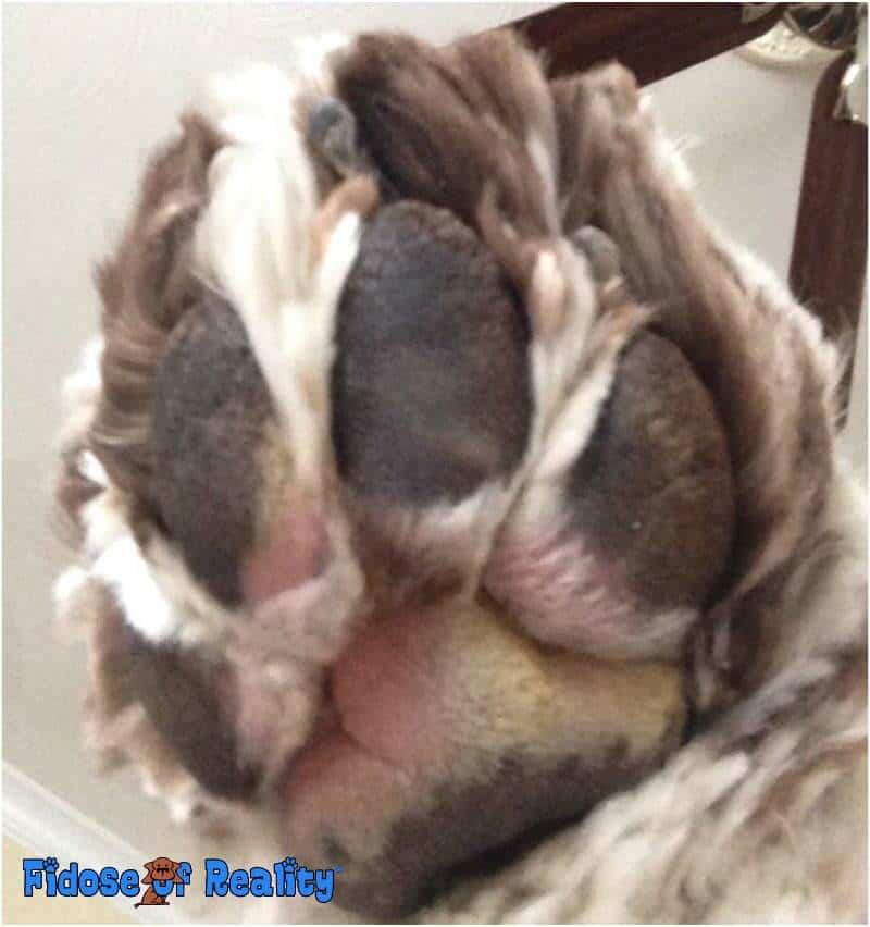 Treat a dog's paw