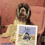 cocker spaniel book