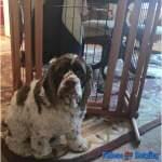 How a #RichellPet Pet Gate Saved My Dog's Life
