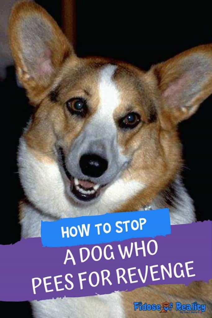 How to stop a dog who pees for revenge