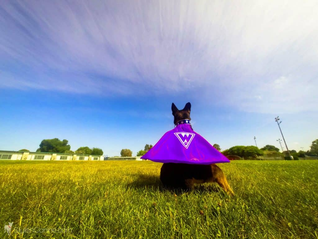 dog cape