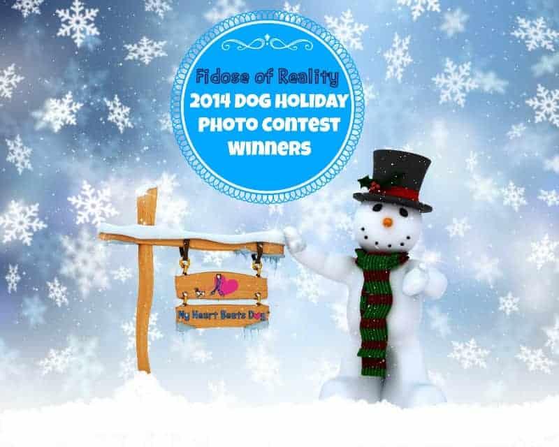 Winners 2014 Fidose Dog Holiday Photo Contest