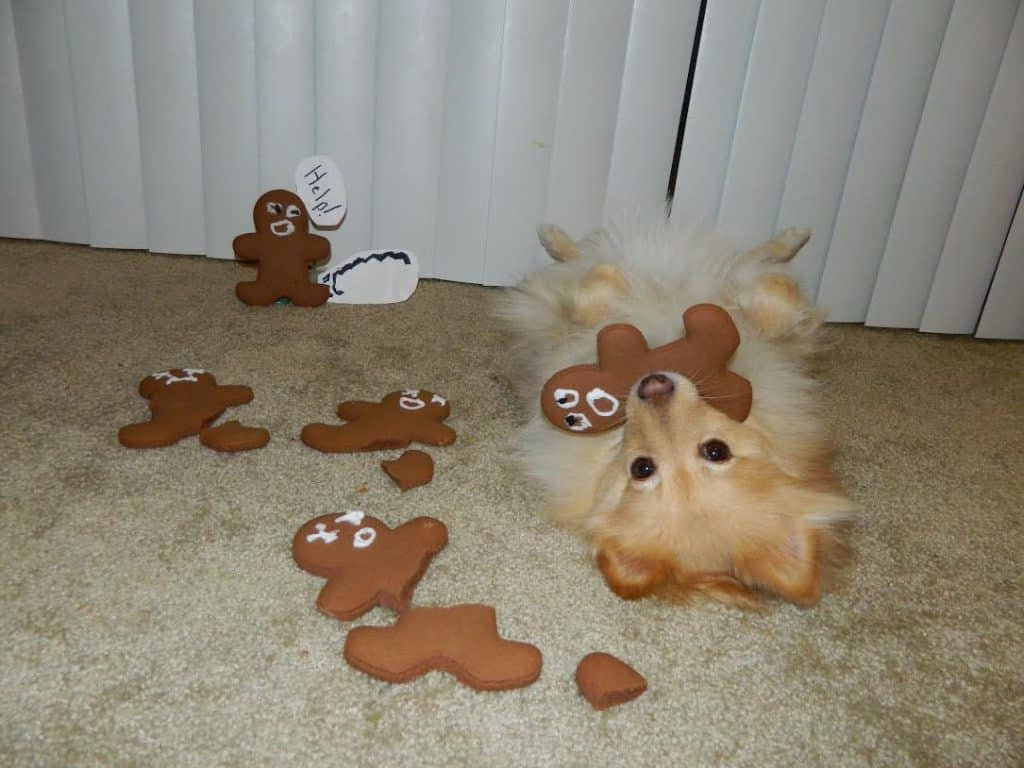 gingerbread dog