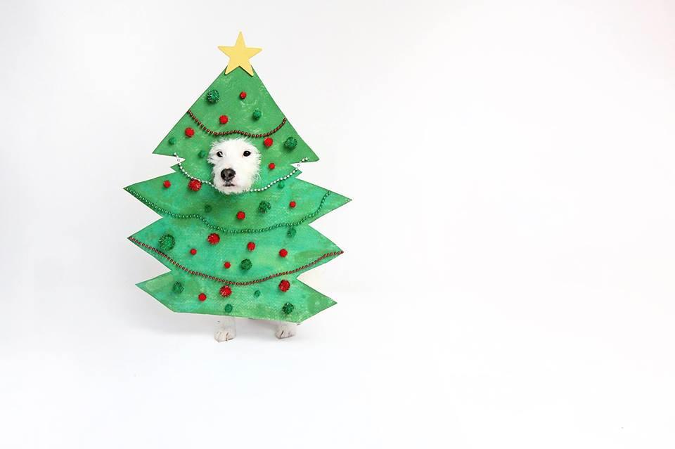 christmas tree dog