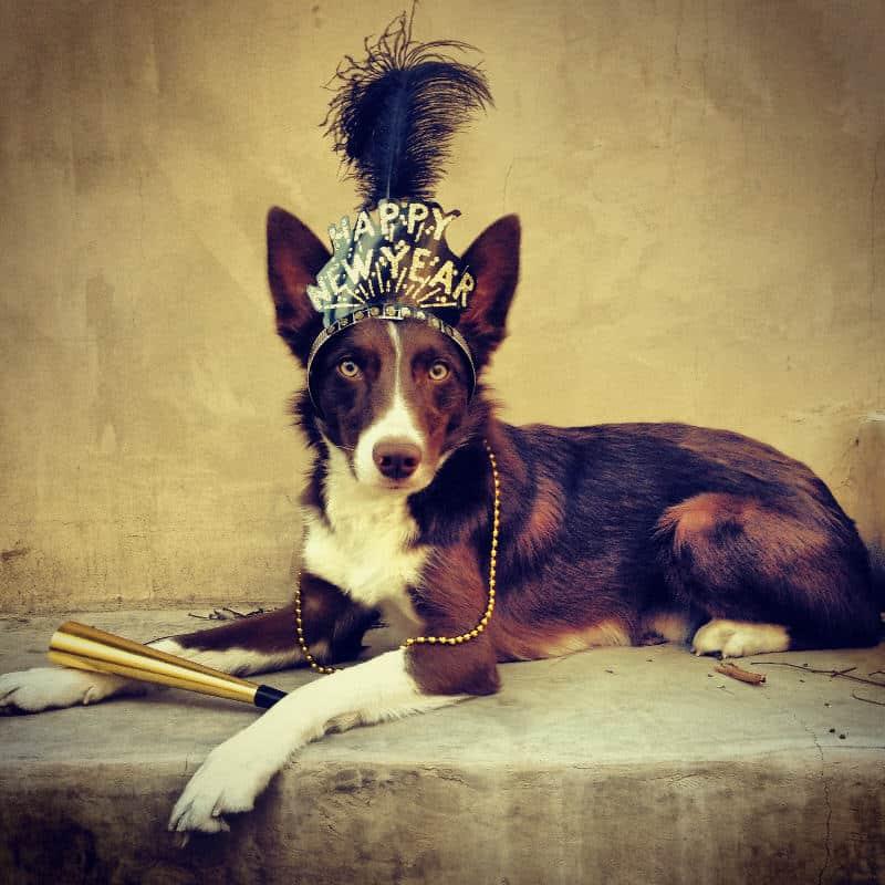 new year dog
