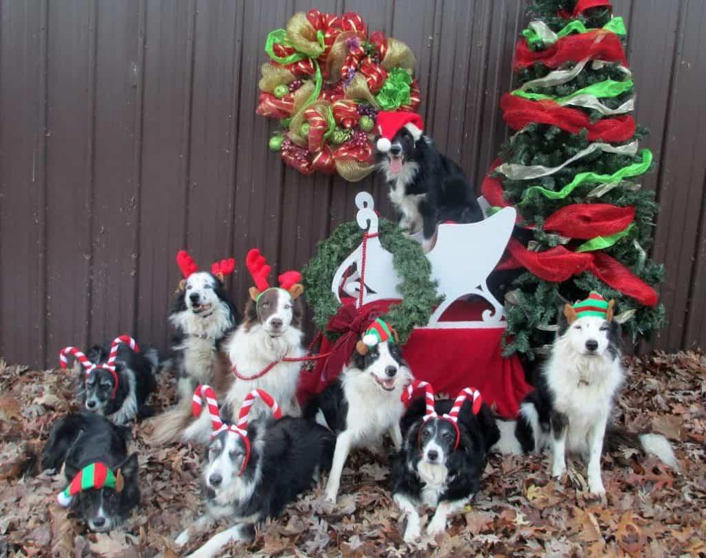 santa candy cane dogs