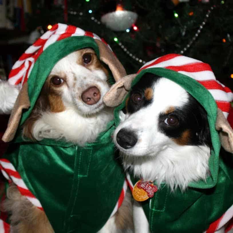 elves dogs