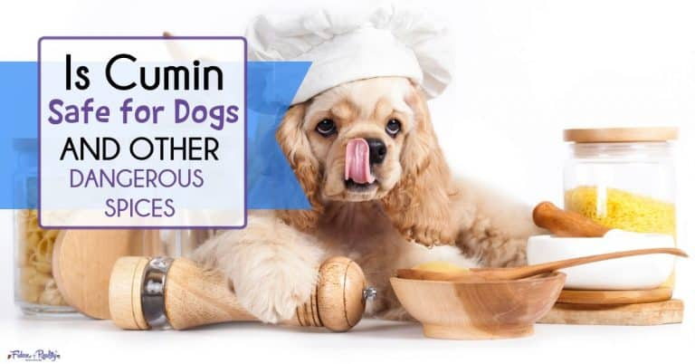 Is Cumin Safe For Dogs Plus Spices That Can Be Harmful