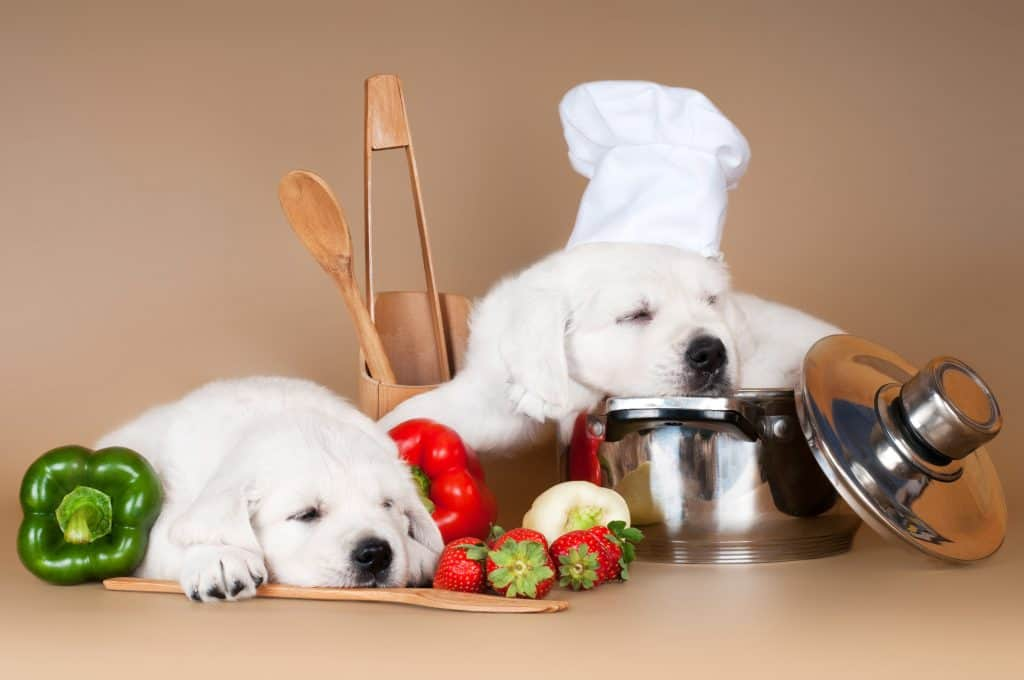 dog cook