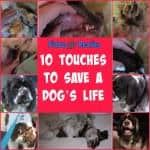 10 Touches To Save a Dog's Life