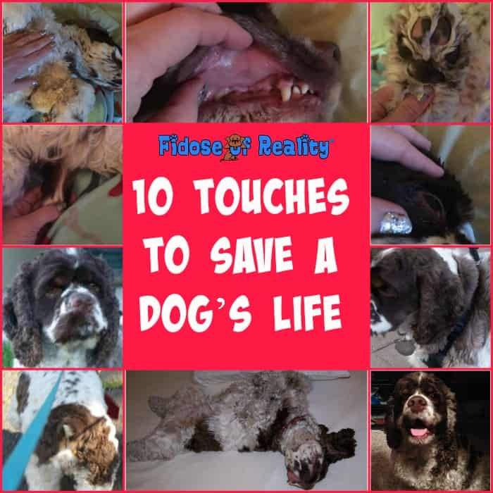 Touches to save a dog life