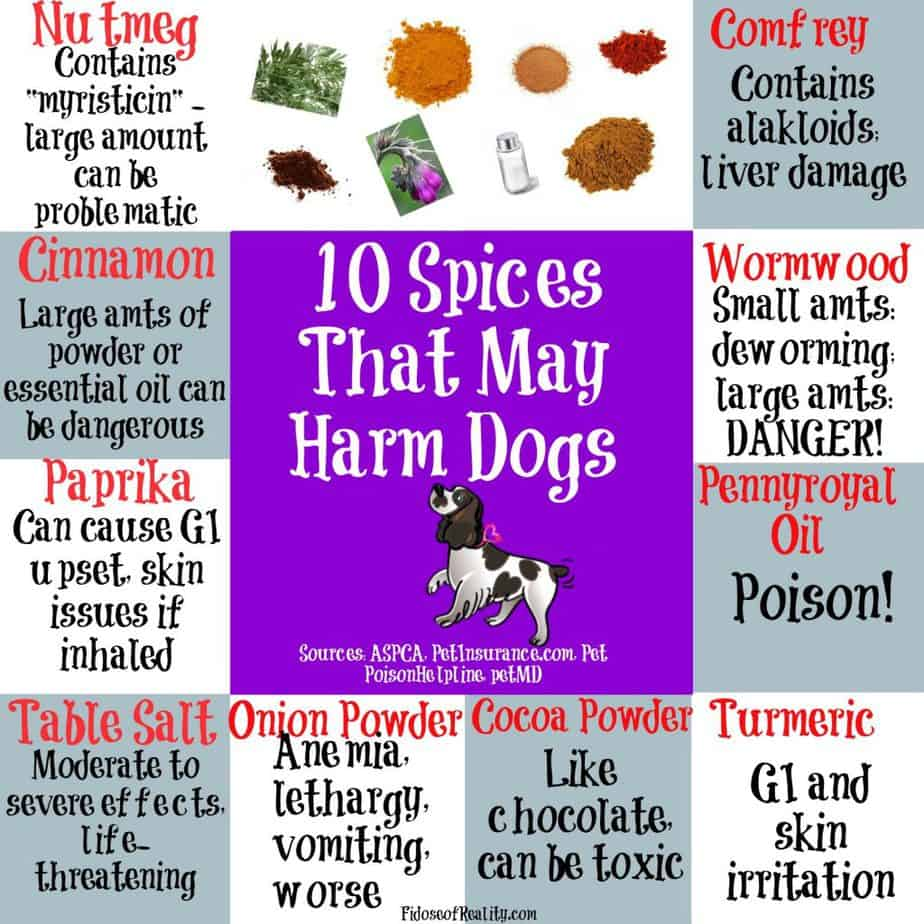 10 Spices That May Harm Dogs Fidose Of Reality