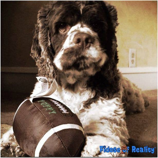 dog superbowl