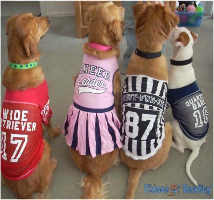 football dogs