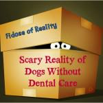 Scary Reality of Dogs Without Dental Care #DogDentalHealth