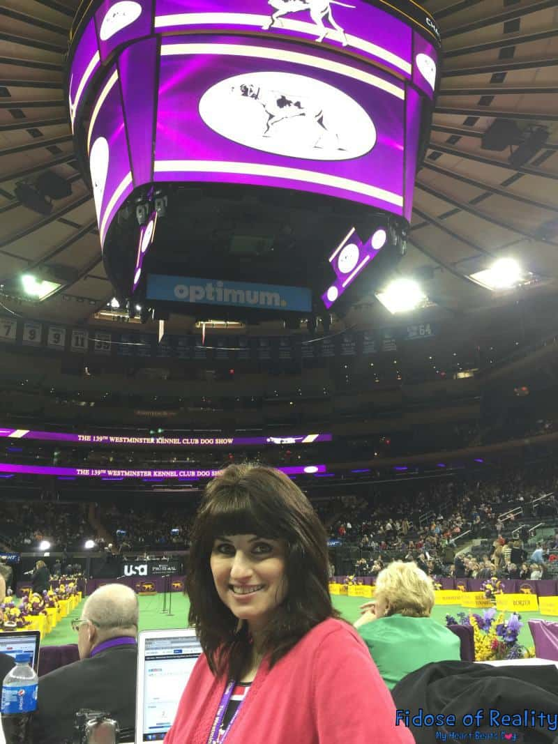 8 Insider Info Facts About Westminster Kennel Club Dog Show