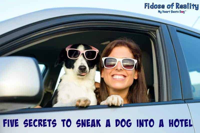 dog travel secrets