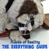 The everything guide to dog ACL injuries