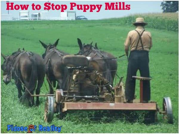 How to Stop Puppy Mills - Fidose of Reality