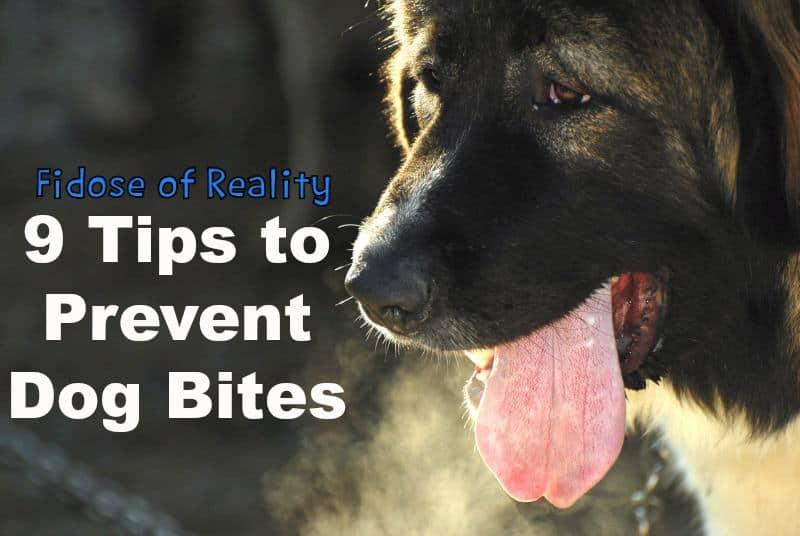 Nine Ways to Prevent Dog Bites
