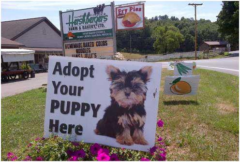 amish puppy mills