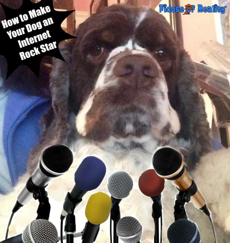 How to Make Your Dog an Internet Rock Star