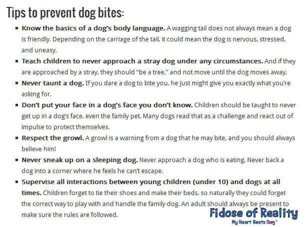 dog bite prevention tips