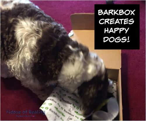 BarkBox dog