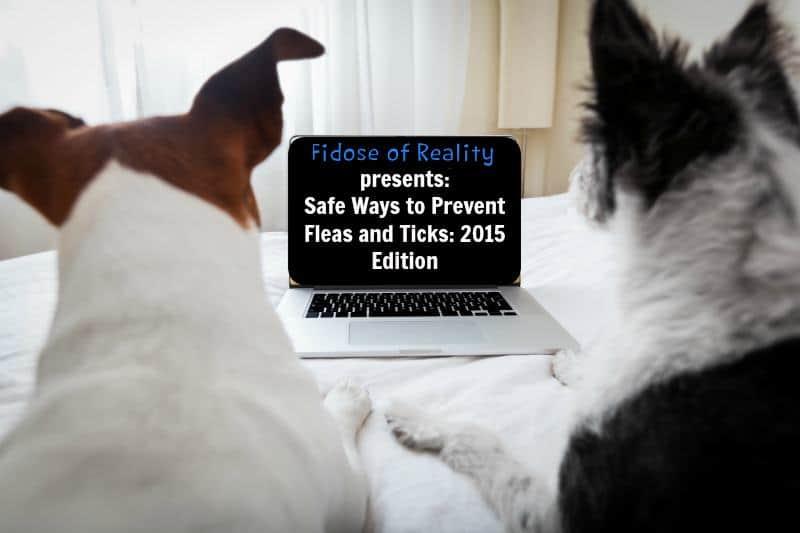 safe flea and tick prevention
