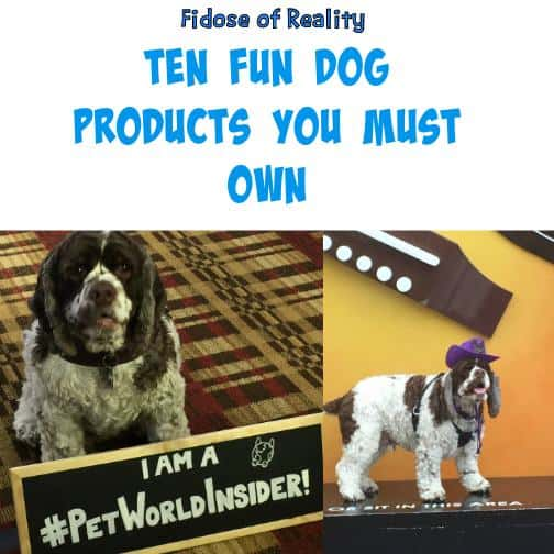 Ten Fun Dog Products You Need to Own