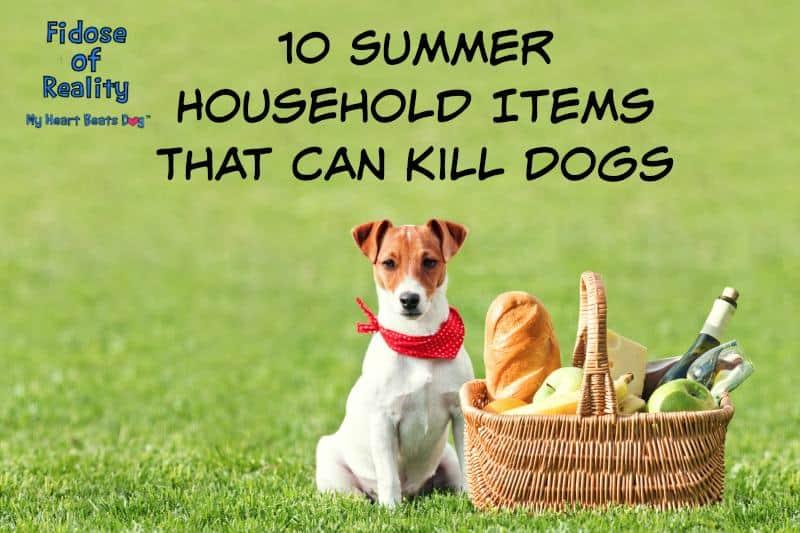 dog summer hazards