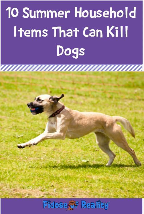 Dog summer dangers
