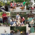 Dog Friendly Amusement Park and Safe Travels Getting There
