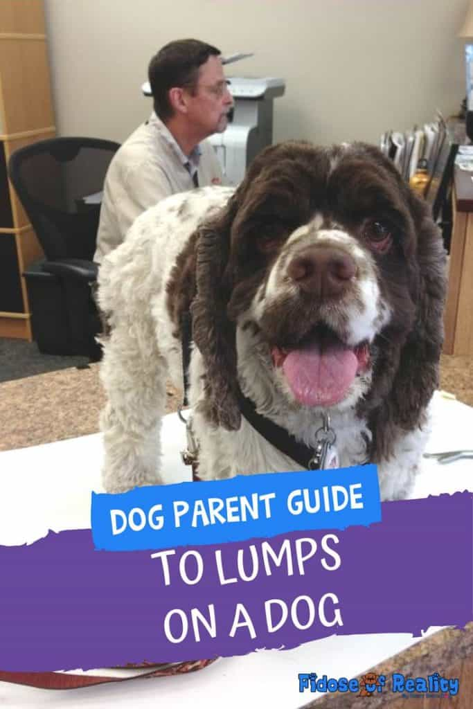 What to do if you find a lump on your dog