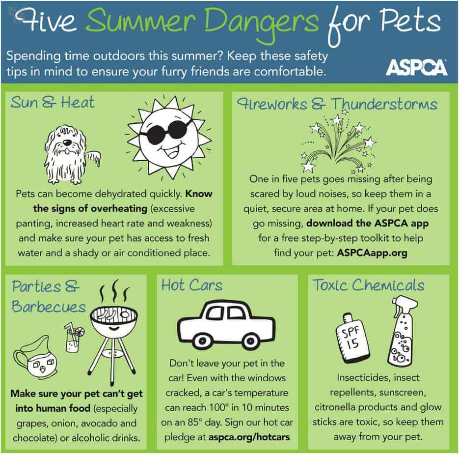 Summer dangers to dogs