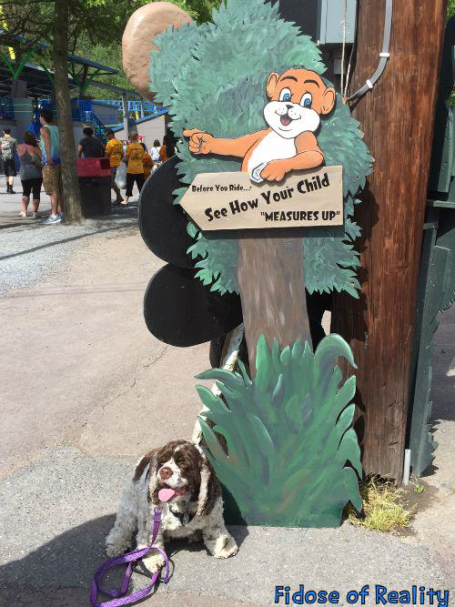 Knoebels Dog Friendly Rides