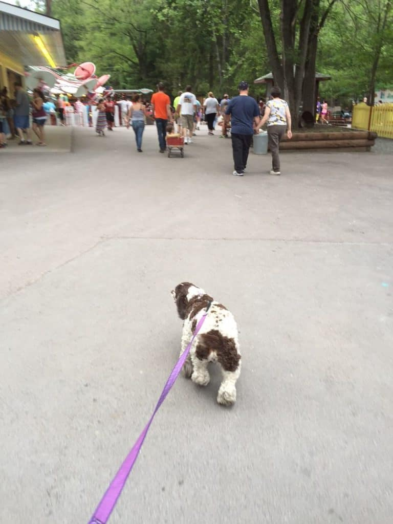 Walking dog at amusement park