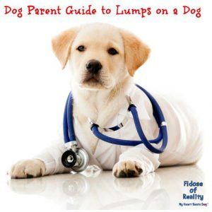 What to do about lumps on a dog