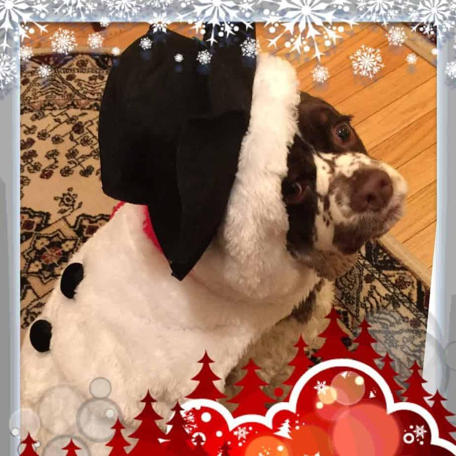 snowman costume dog