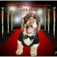 creating dog photo memories