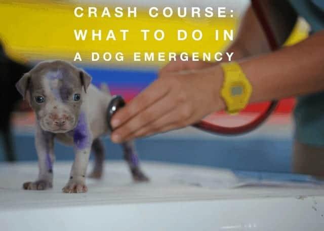 dog emergency help