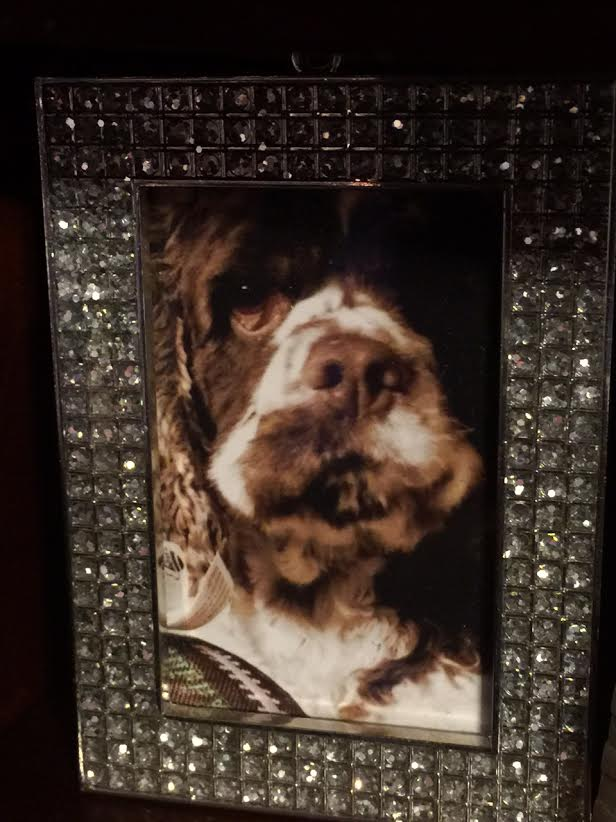 cute dog frame project