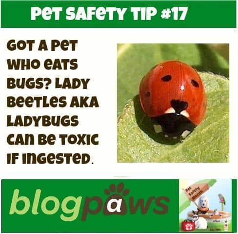 bug danger
