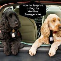dog weather emergency