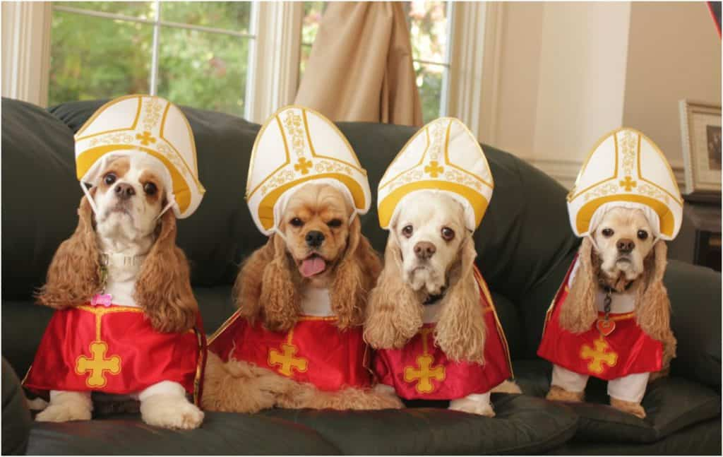 Papal dogs